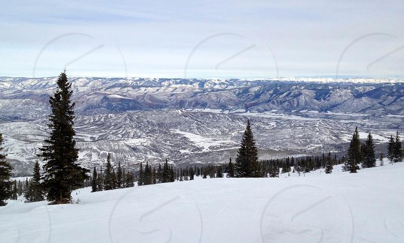 snow covered pine tree field photo