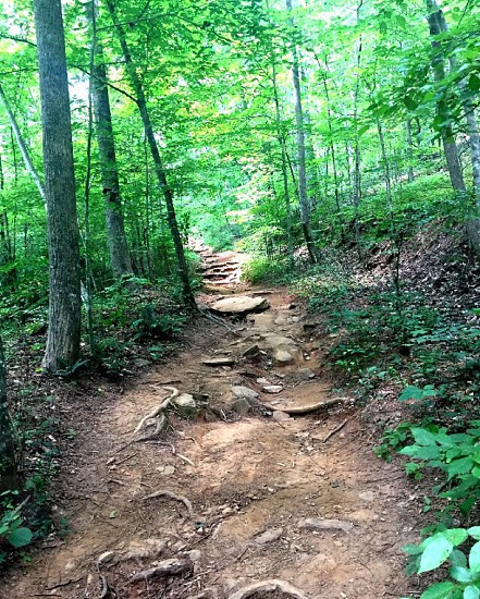 Vickery Creek Trail. Roswell; Georgia; Hiking; Nature; landscape; wilderness; peaceful photo