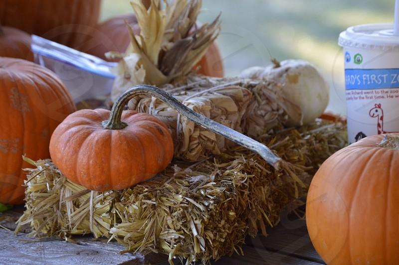 Pumpkin small hay straw mini hay mini pumpkin photo