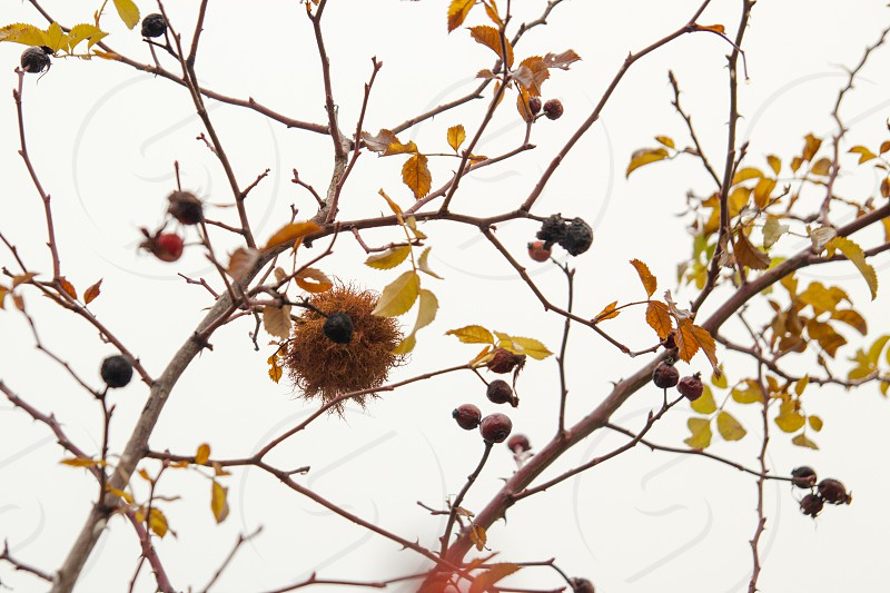 brown bird's nest on tree under gray sky photo