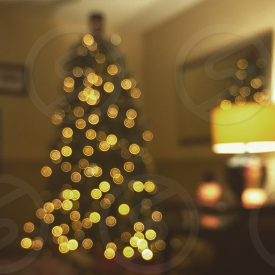 Christmas; Christmas tree; Christmas lights; bokeh; photo
