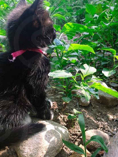 Cat gato negro nature pics green puss cute photo