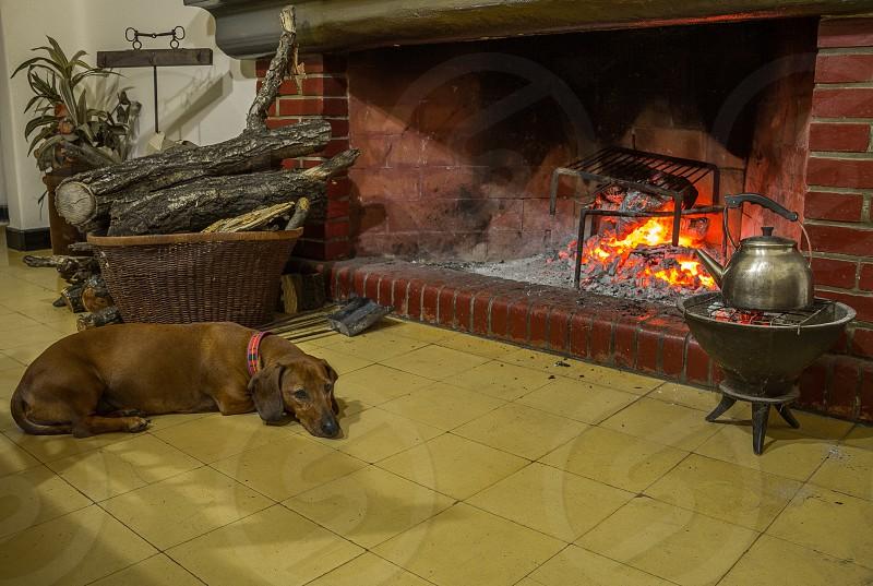 dachsund resting near fire photo