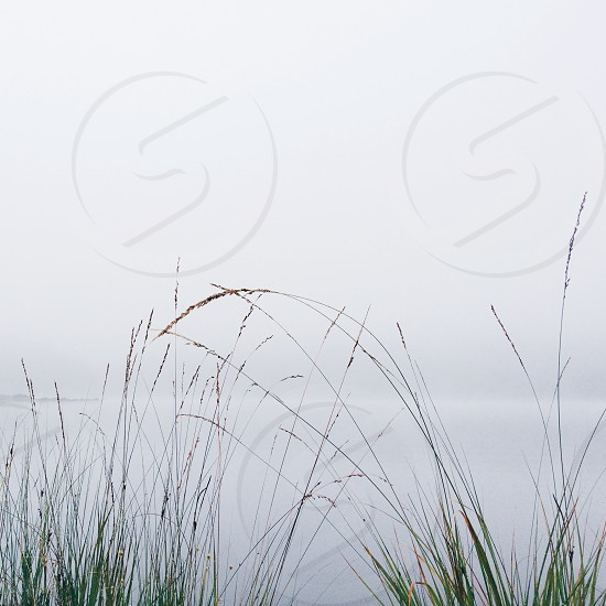 grass and fog photo