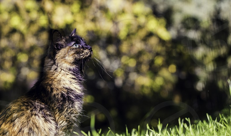Pretty green-eyed cat with a lovely bokeh background photo