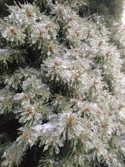 close up photo of frozen leaf tree photo