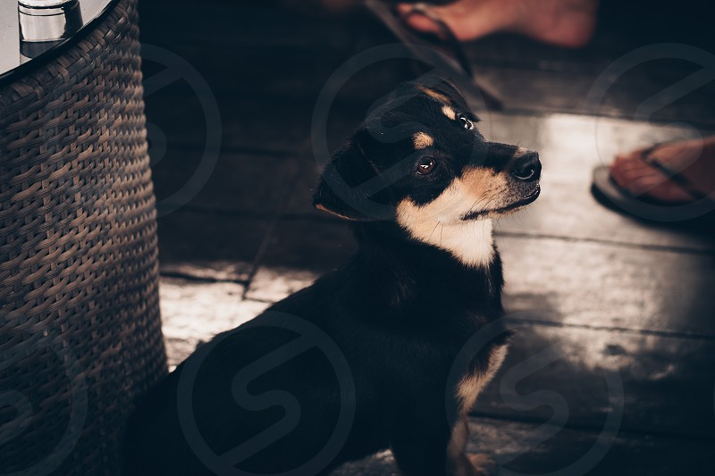 Side of black pet dog sitting looking up to family member in living space photo