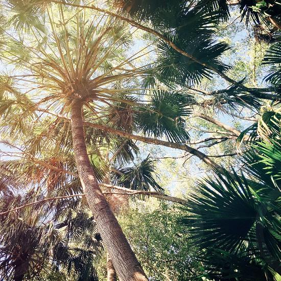 trees low angle photography photo