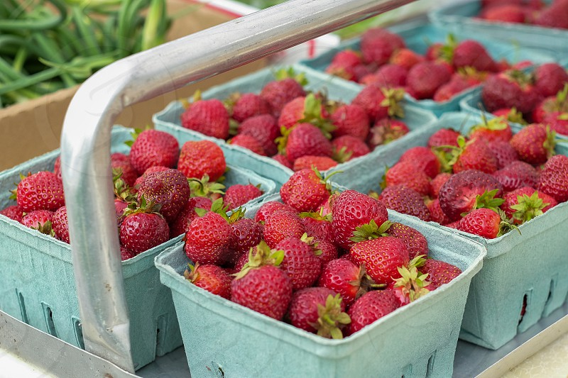 Beautiful farmer's market red strawberries; Belgrade Lakes Maine photo