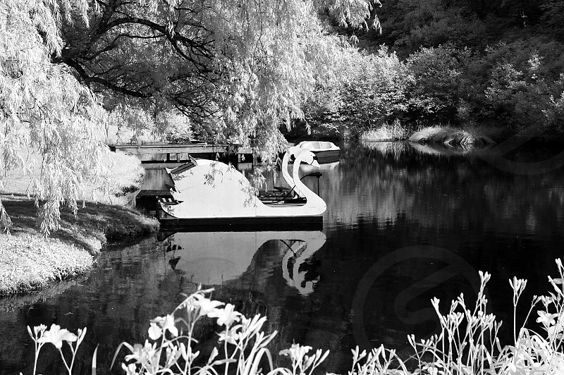 Swan boat on a lake infrared reflection photo