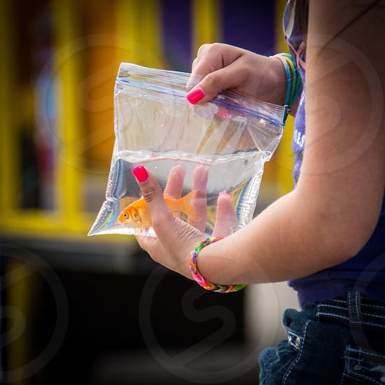 gold fish on plastic bag photo