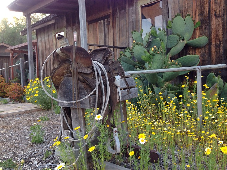 Old west saddle general store. photo