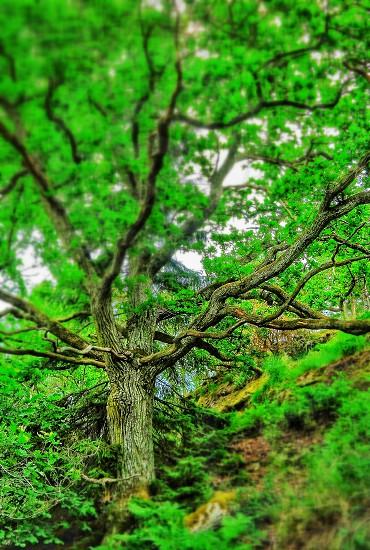 Oldtreegreenforrest photo