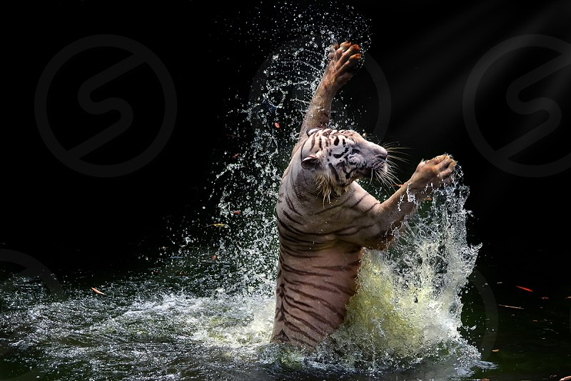 Dance in the water photo