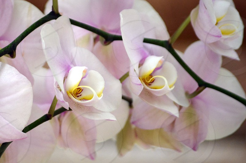 Orchids flowers spring nature outdoors landscaping bouquets wedding flora pastel garden photo