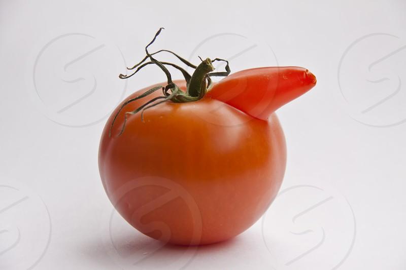 Tomato with a proboscis photo