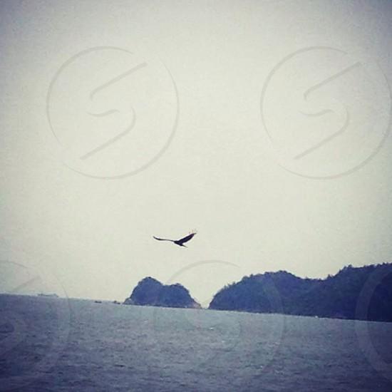 silhouette of flying bird above ocean photo