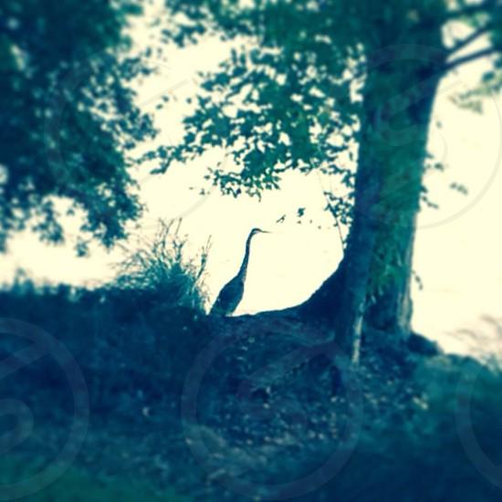 Crane lake water bird photo