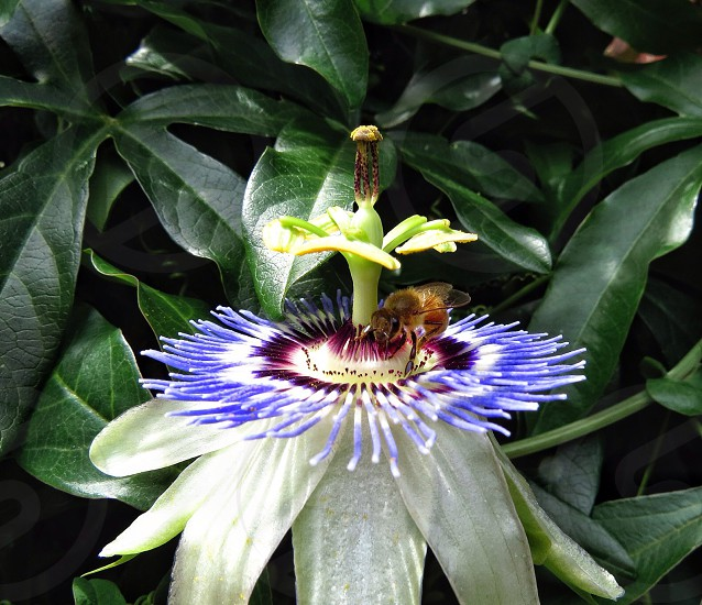 A Visit to the Unusual Flower photo