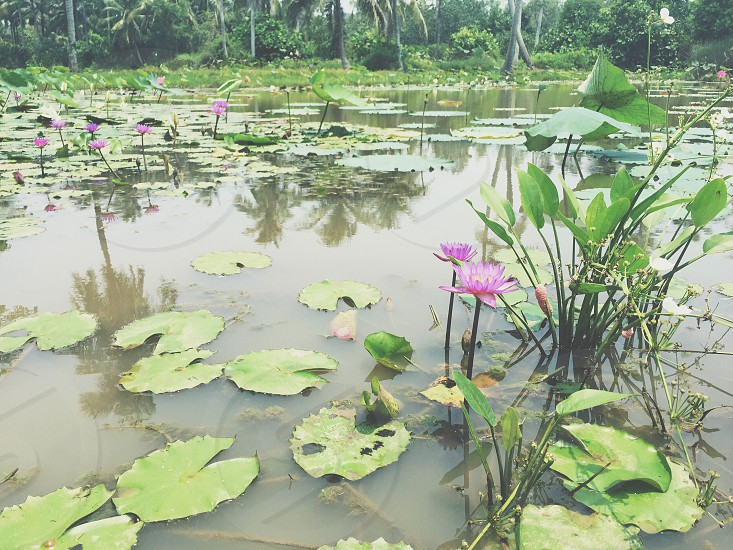 green waterlily surrounded by body of water during daytime photo