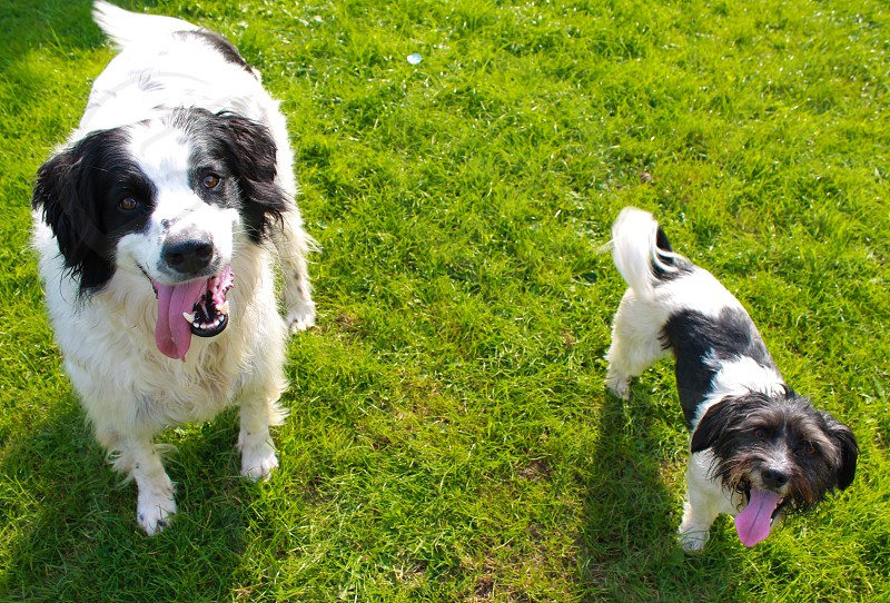 Two dogs big small breeds happy photo