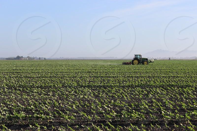 Tractor plants California  photo