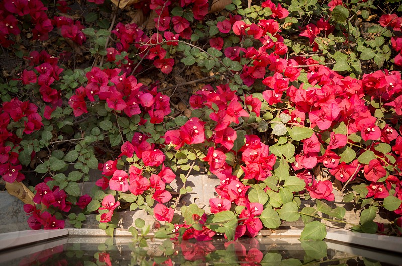 Flowers; red; sunshine; leaves; green photo