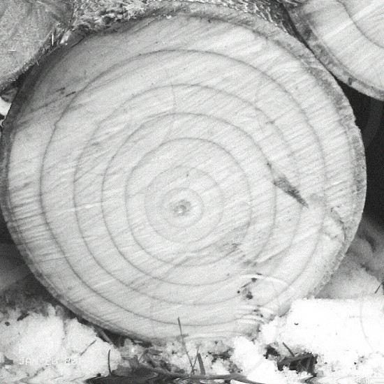 wood black and white snow tree photo