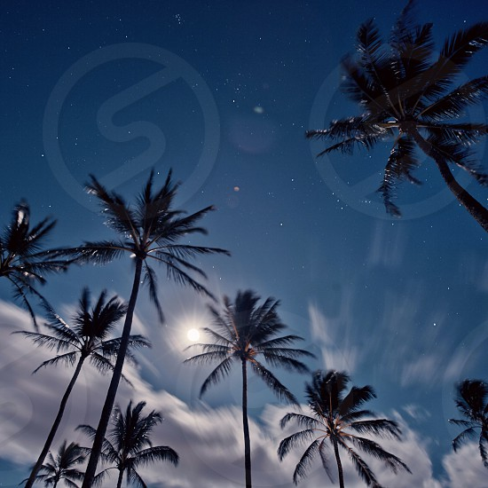 view of coconut trees photo