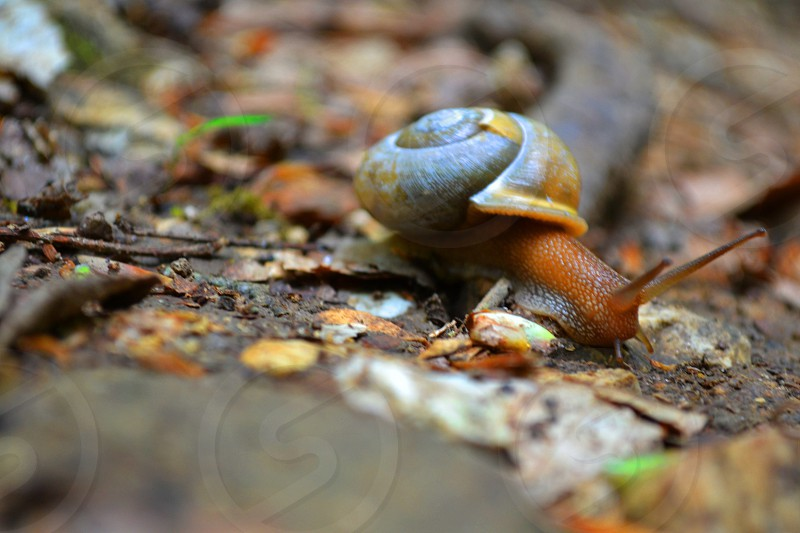 selective focus photography of snail crawling on ground with grasses photo