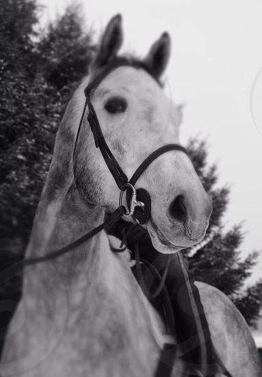white horse in black and white scale photo