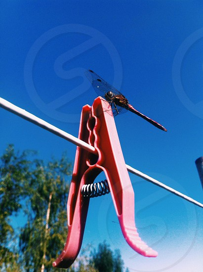 carmine dragonfly on pink plastic clothespin on white cloth line photo