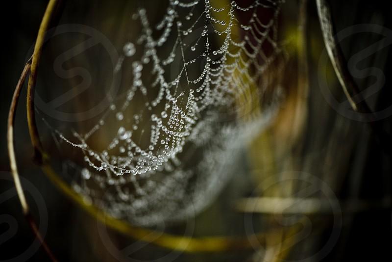spiderweb details macro closeup photo