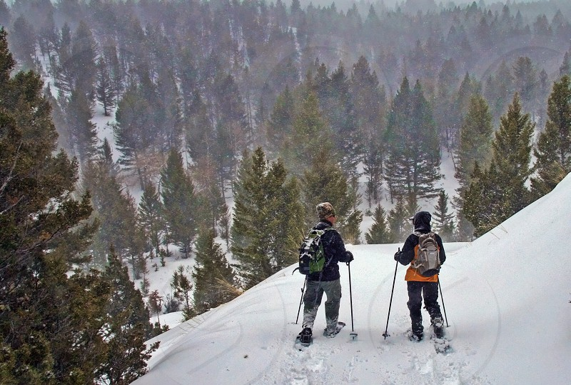 Snowshoeing in Yellowstone National Park during a snowstorm photo