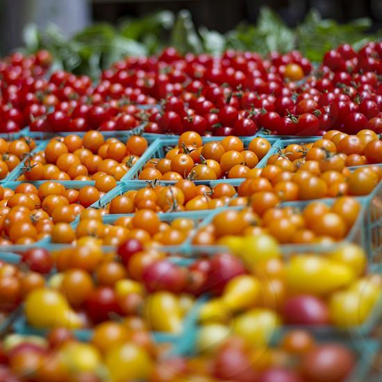 Tomatoes life orange red garden bokeh stock market photo