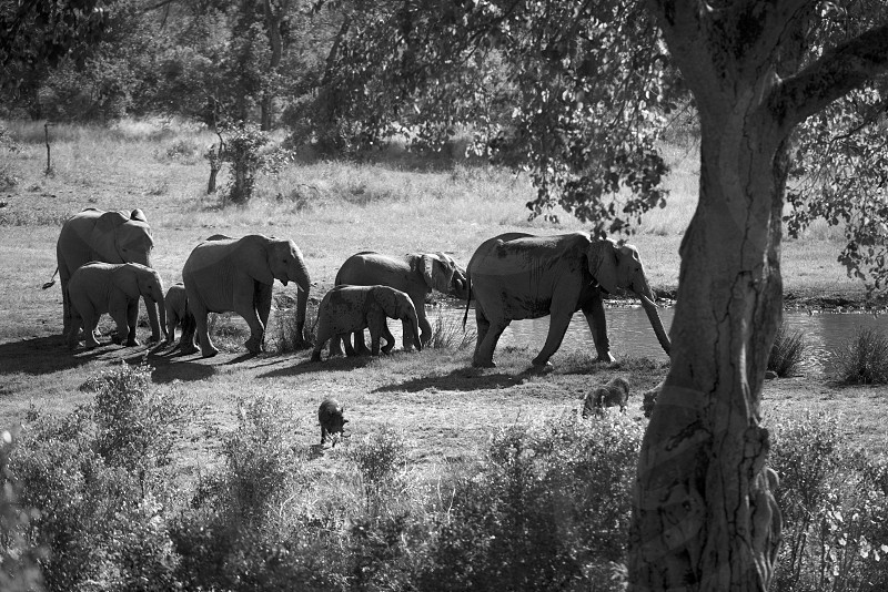 Wildlife in South Africa while on Safari.  Majestic. photo