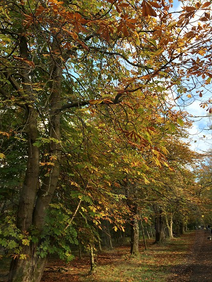 Autumn leaves in Mugdock Country Park photo