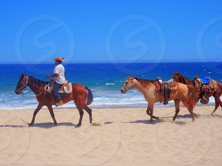 Horses are waiting for you in Cabo. photo