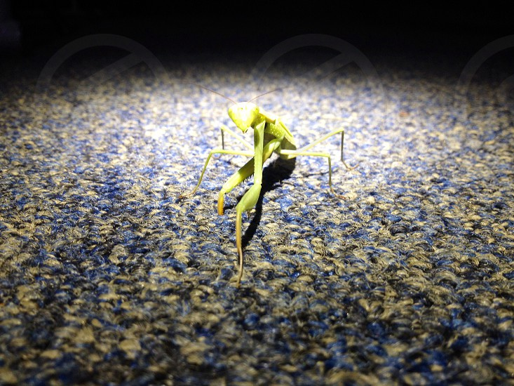 Mantis praying... photo