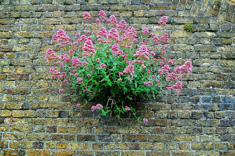 view of small petaled flower on brick wall photo