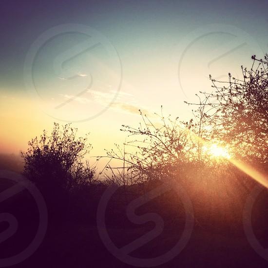 bush over sunrise photography  photo