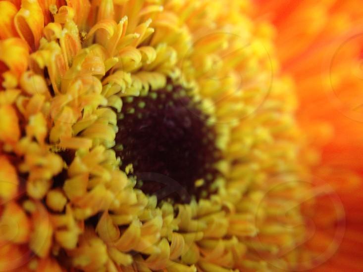 Fall flowers photo