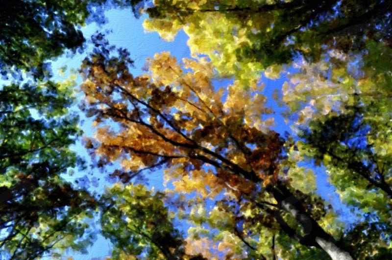 fall leaves trees photo
