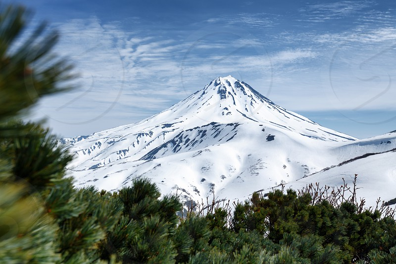 Kamchatka Peninsula volcanic landscape: beautiful snowy cone of Vilyuchinsky Volcano and thickets of evergreen Pinus Pumila bushes. Eurasia Russian Far East Kamchatka Region Vilyuchinsky Pass. photo