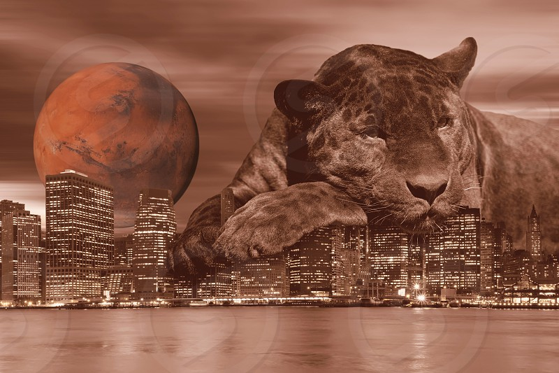 Black leopard is lying on the Lower Manhattan skyline with Mars on the horizon . All in vintage brown hue. photo