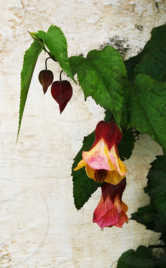 Art Flower Plant Nature Beauty photo