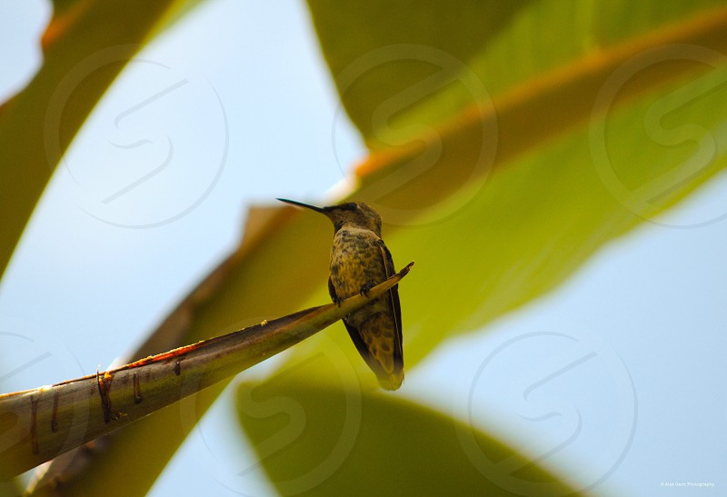 Soft humming bird simple clear cute peaceful  photo