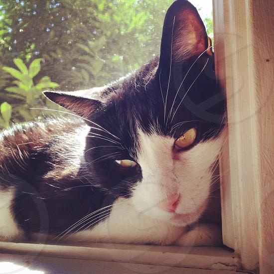 Cat basking photo