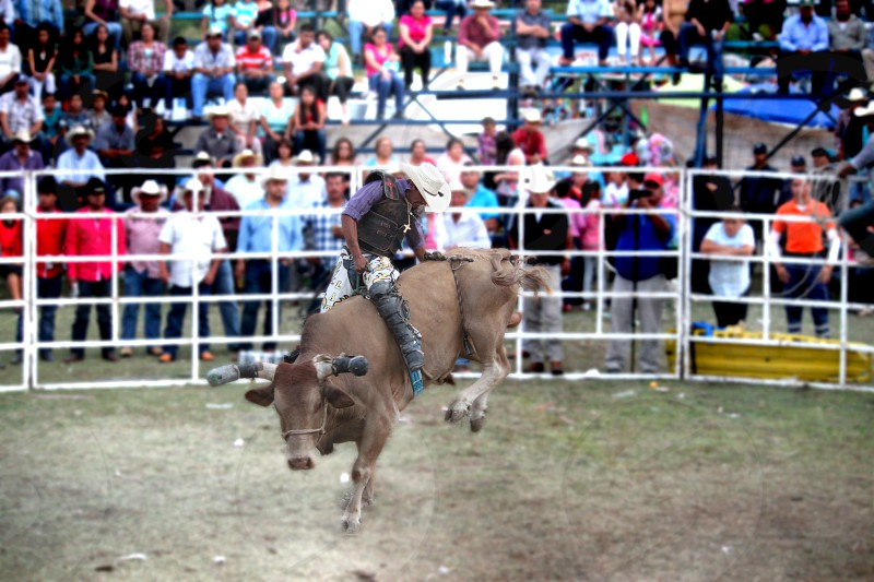 Jaripeo Mexican Rodeo photo
