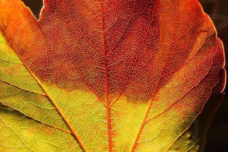 orange green leaf photo